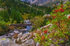 Lijsterbes en voetbrug op de wandelingssleep in de Cascade stock foto's