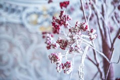 Lijsterbes met rode bessen in de sneeuw Stock Afbeeldingen
