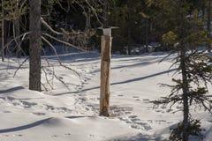 Lik-steen in de sneeuw met heel wat sporen van verschillende anima royalty-vrije stock afbeeldingen