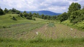 Lika acres 3. Landscape around Trojvrh village in Lika, Croatia Royalty Free Stock Image