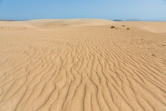 Like a desert. Sand dunes  on Fuerteventura near Corralejo called Grandes Playas Looking like Sahara Royalty Free Stock Images