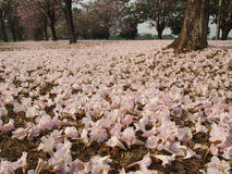 Like a dream. Pink falling flowers on  grass Royalty Free Stock Photo