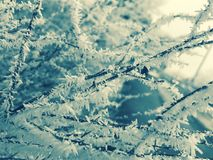 Beauty of the winter. Like frost, beautiful things are being born in us Royalty Free Stock Images