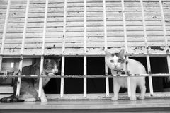 Like in the prison. Cats on the windowsill. Adult cats. Stock Image