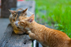 Like spoiled cat. Mother and child Royalty Free Stock Images