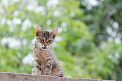 Like a tiger. Tigerish cat in her nature environment Stock Images