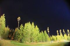 Night photography. The likeywab Miley milky way fun pipe tree strays stars trip road fun cold Royalty Free Stock Image