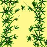 liknar snabbt gräs för bambu som växer många, stemstingtreen som mycket används Royaltyfri Bild