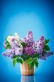 Lilás bonito da mola Fotos de Stock