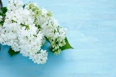 Lilás branco no fundo azul fotografia de stock royalty free