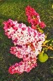Lilás brilhante no sol imagem de stock