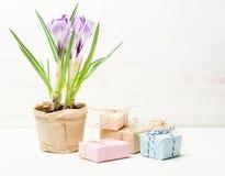Lilás da mola e açafrão roxo em um vaso de flores folhas do verde Cartão da mola Imagens de Stock Royalty Free