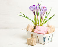 Lilás da mola e açafrão roxo em um vaso de flores folhas do verde Cartão da mola Fotos de Stock