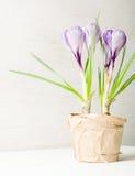Lilás da mola e açafrão roxo em um vaso de flores folhas do verde Cartão da mola Fotografia de Stock Royalty Free
