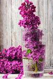 Lilás de maio no vaso Fotografia de Stock