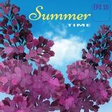 Lilás doce no fundo do azul-céu Flores do lilás do vetor Fotografia de Stock