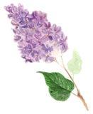 Lilás - flores e folhas Papel de parede abstrato com motivos florais Fotografia de Stock