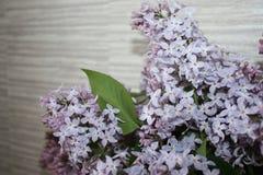 Lilás, lilás em um vaso Fotos de Stock
