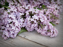 Lilás na madeira resistida Fotografia de Stock