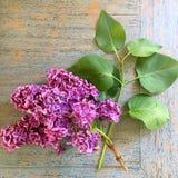 Lilás recentemente escolhido em uma tabela de madeira Fotografia de Stock Royalty Free