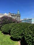 Lilás roxo bonito em um ambiente urbano contra o céu foto de stock