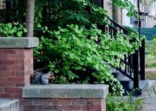 Lil Squirrel que masca en un shnack del lil foto de archivo libre de regalías