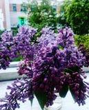 lila Royaltyfria Bilder