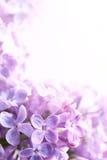 Lila abstrakter Hintergrund des Kunst-Frühlinges Stockfoto