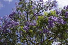 Lila Blüte lizenzfreies stockbild