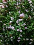 Lila Blüte Ein schöner Blumenstrauß Nahaufnahme Stockfotos