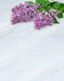 Lila Blütenniederlassungen auf Carrara-Marmor Countertop Stockfoto