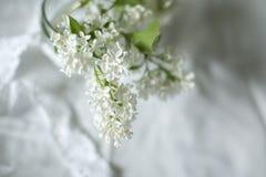 Lila blanca en el florero en la ventana Imágenes de archivo libres de regalías