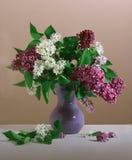 Lila blanca y púrpura Fotos de archivo