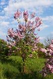 Lila blom royaltyfri fotografi