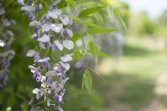 Lila blomma Arkivbild