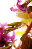 Lila blomma Arkivfoton