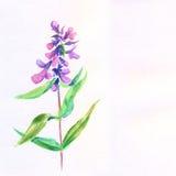 Lila blomma. Blom- illustration för vattenfärg. Stock Illustrationer