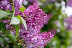 Lila blomma Med bokehbakgrund Arkivfoto