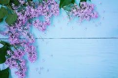 Lila blommor på ljus - blå träbakgrund royaltyfri foto