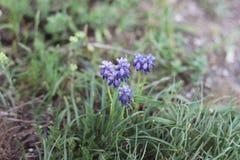 Lila blommor växer på a royaltyfri fotografi