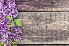 Lila blomning på lantlig träbakgrund med tomt utrymme Royaltyfria Bilder