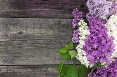 Lila blomning på lantlig träbakgrund med tomt utrymme Royaltyfri Fotografi