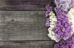 Lila blomning på lantlig träbakgrund med tomt utrymme Royaltyfri Bild
