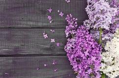 Lila blomning på lantlig träbakgrund med tomt utrymme Arkivfoto