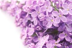 Lila blomning på vit bakgrund greeting lyckligt nytt år för 2007 kort Arkivbild