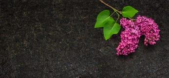 Lila blomningfilialer på antikvitet bryner granitcountertopen Arkivfoto