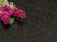Lila blomningfilialer på antikvitet bryner granitcountertopen Arkivbilder