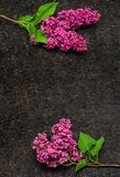 Lila blomningfilialer på antikvitet bryner granitcountertopen Arkivfoton
