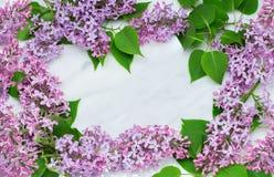 Lila blomningfilialram på Carrara marmorcountertop Fotografering för Bildbyråer