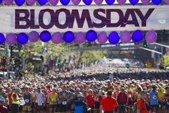 Lila Bloomsday 2013 12k laufen in Anfangszeile Spokanes WA Lizenzfreies Stockfoto